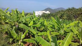 Agricultural Land in Attapadi - Agricultural Land for Sale