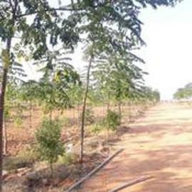Agricultural Land in Hyderabad | Agricultural Land for Sale in Hyderabad