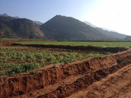 Agricultural Land in Madurai | Agricultural Land for Sale in
